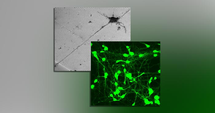 Two overlaid microscope images of nanoscaffolding